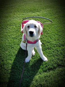 Meet Rosie: the blind therapy dog @ Lomira QuadGraphics Community Library